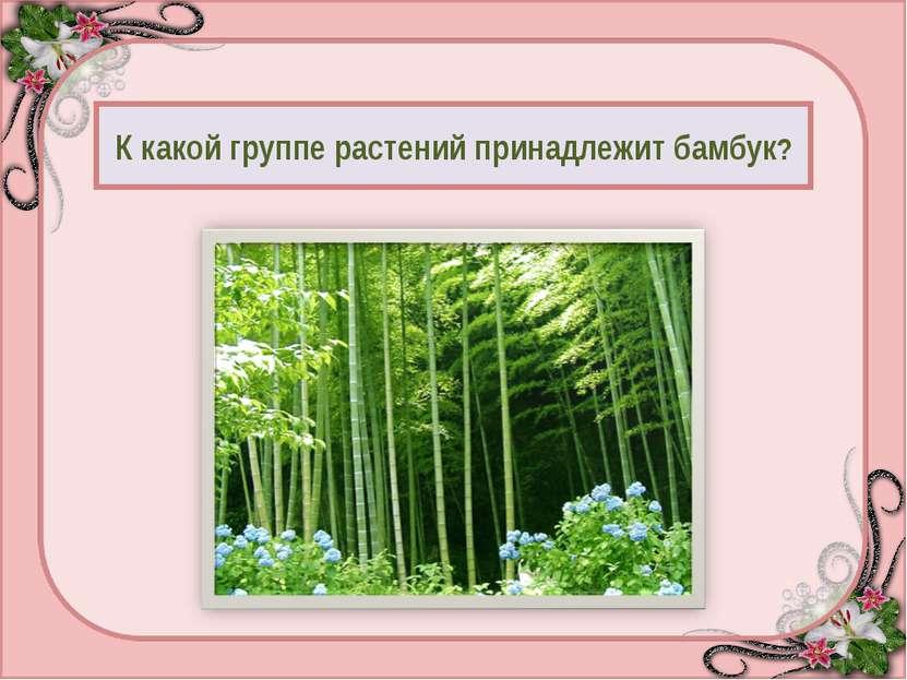 К какой группе растений принадлежит бамбук? Дерево - 95 Куст - 50 Трава - 0