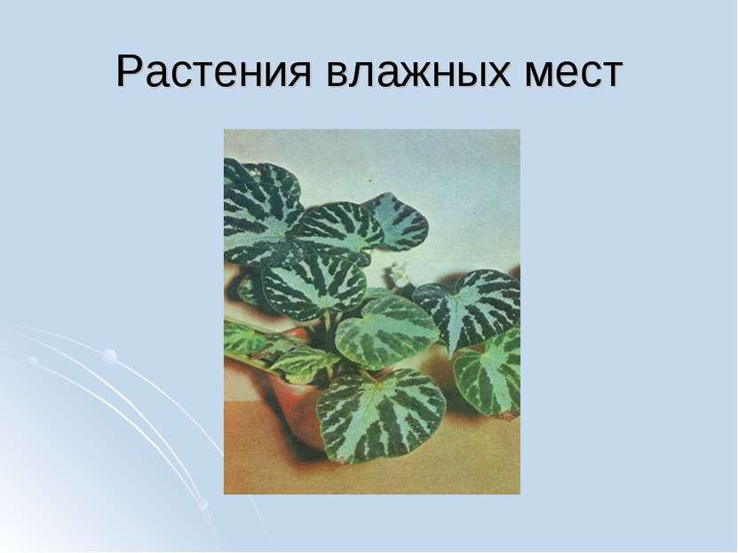 Растения влажных мест