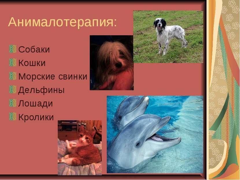 Анималотерапия: Собаки Кошки Морские свинки Дельфины Лошади Кролики