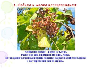 Конфетное дерево – родом из Китая. Растет оно еще и в Индии, Японии, Корее. Н...