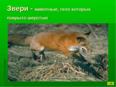 Звери - животные, тело которых покрыто шерстью