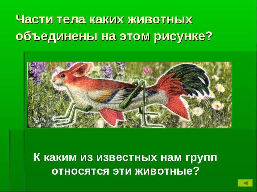 Части тела каких животных объединены на этом рисунке? К каким из известных на...