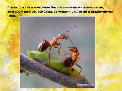 Питаются эти насекомые беспозвоночными животными, нектаром цветов, грибами, с...