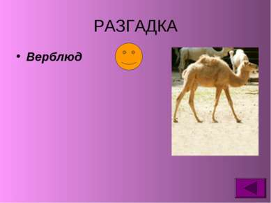 РАЗГАДКА Верблюд