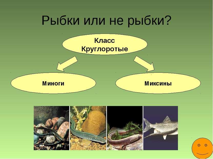 Рыбки или не рыбки? Класс Круглоротые Миноги Миксины
