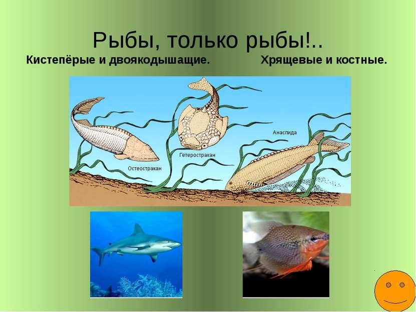 Рыбы, только рыбы!.. Кистепёрые и двоякодышащие. Хрящевые и костные.