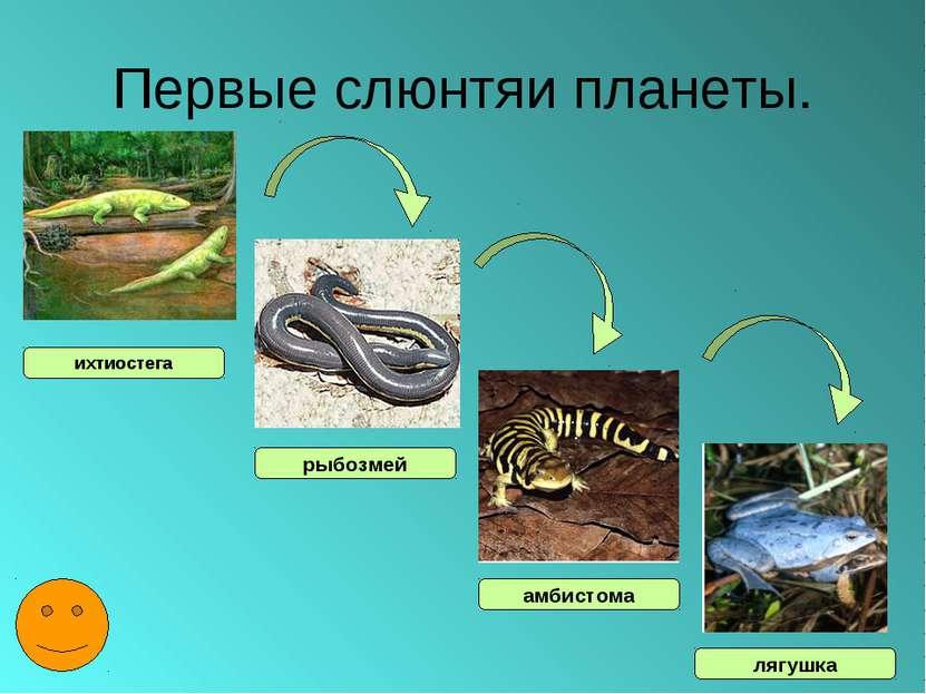Первые слюнтяи планеты. ихтиостега рыбозмей амбистома лягушка