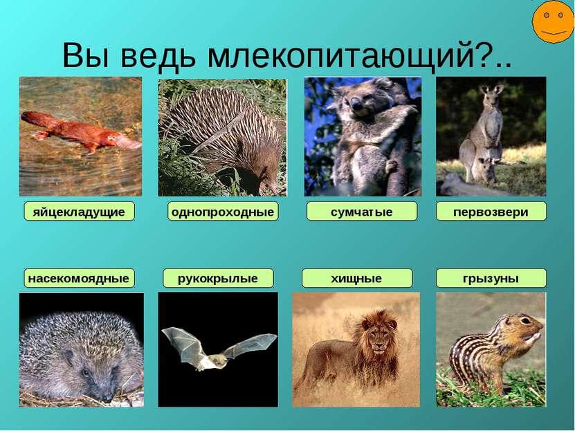 Вы ведь млекопитающий?.. насекомоядные яйцекладущие рукокрылые однопроходные ...