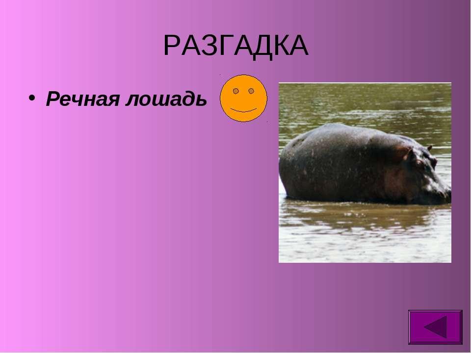 РАЗГАДКА Речная лошадь