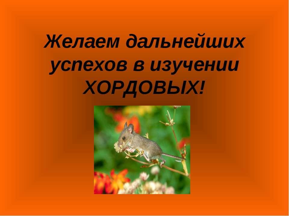 Желаем дальнейших успехов в изучении ХОРДОВЫХ!
