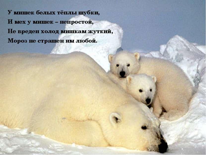 У мишек белых тёплы шубки, И мех у мишек – непростой, Не вреден холод мишкам ...