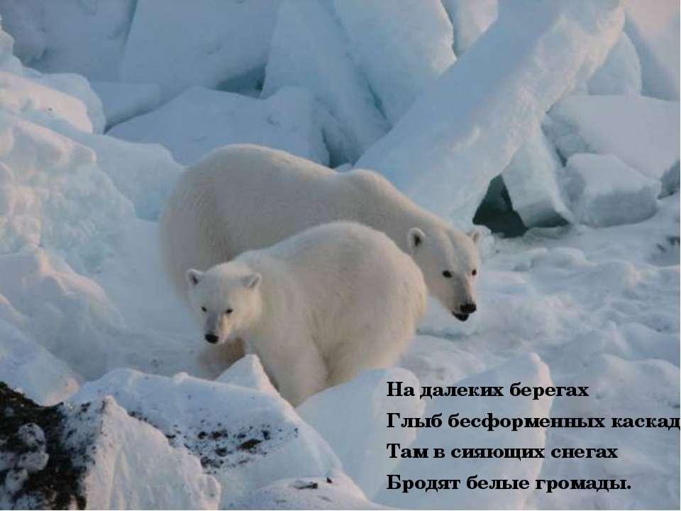 На далеких берегах Глыб бесформенных каскады. Там в сияющих снегах Бродят бел...