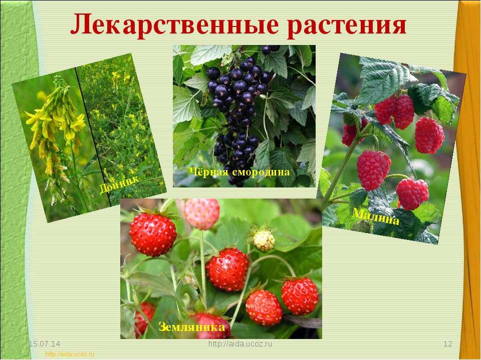 Лекарственные растения * http://aida.ucoz.ru * Донник Чёрная смородина Малина...