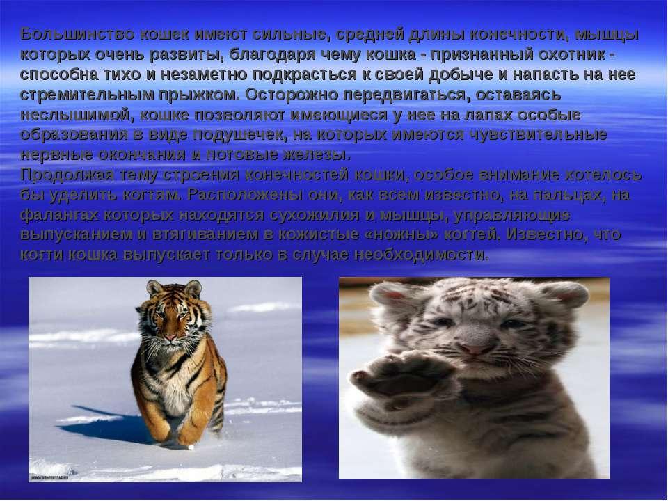 Большинство кошек имеют сильные, средней длины конечности, мышцы которых очен...
