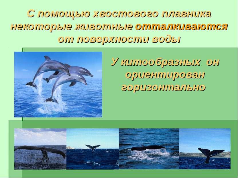 С помощью хвостового плавника некоторые животные отталкиваются от поверхности...