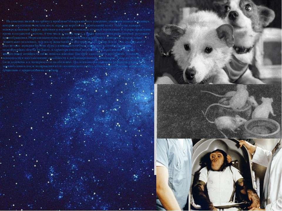На участках выхода на орбиту у животных обнаруживалось ускорение учащения пул...