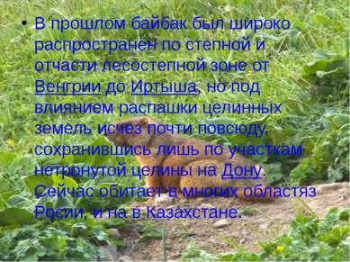 В прошлом байбак был широко распространён по степной и отчасти лесостепной зо...