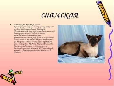 сиамская СИАМСКАЯ КОШКА, порода короткошерстных домашних кошек, получила имя ...