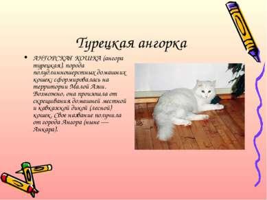 Турецкая ангорка АНГОРСКАЯ КОШКА (ангора турецкая), порода полудлинношерстных...