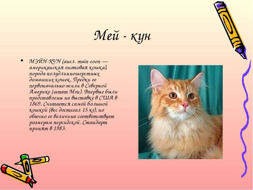 Мей - кун МЭЙН-КУН (англ. main-coon — американская енотовая кошка), порода по...