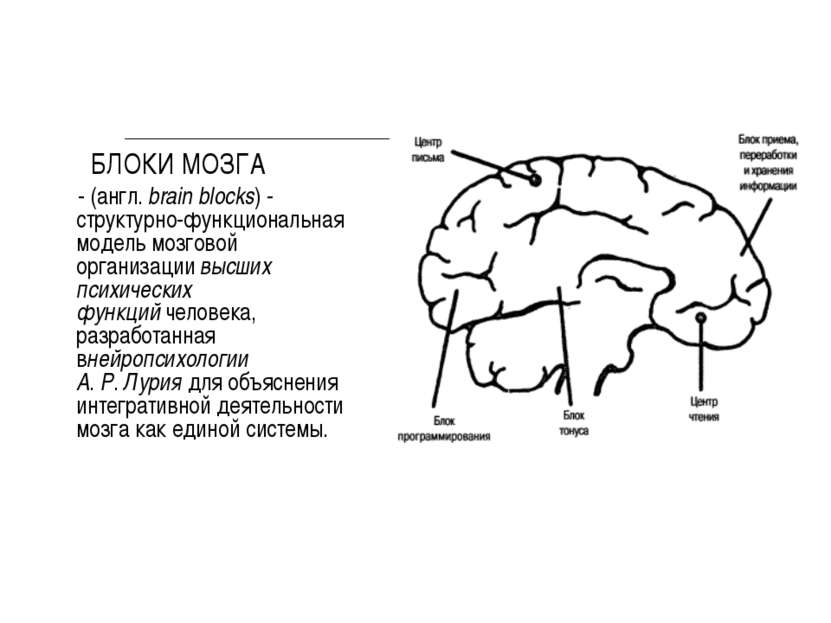 БЛОКИ МОЗГА - (англ.brain blocks) - структурно-функциональная модель мозгово...