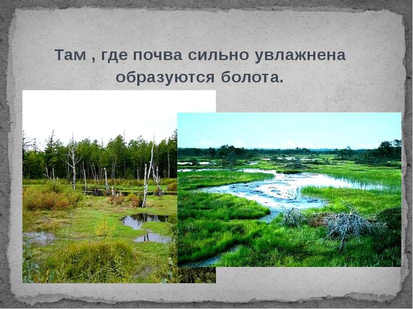 Там , где почва сильно увлажнена образуются болота.
