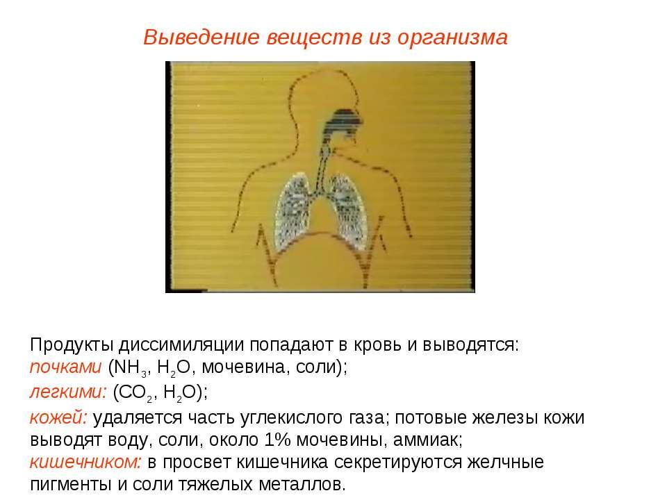 Выведение веществ из организма Продукты диссимиляции попадают в кровь и вывод...
