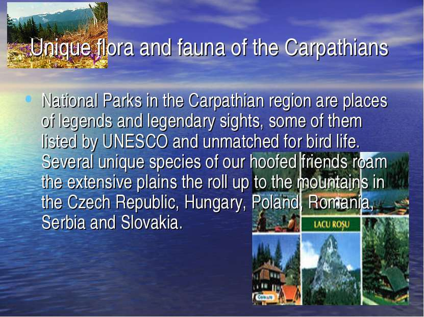 Unique flora and fauna of the Carpathians National Parks in the Carpathian re...