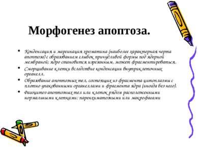 Морфогенез апоптоза. Конденсация и маргинация хроматина (наиболее характерная...
