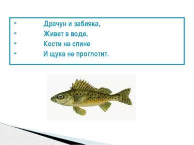 Драчун и забияка, Живет в воде, Кости на спине И щука не проглотит.