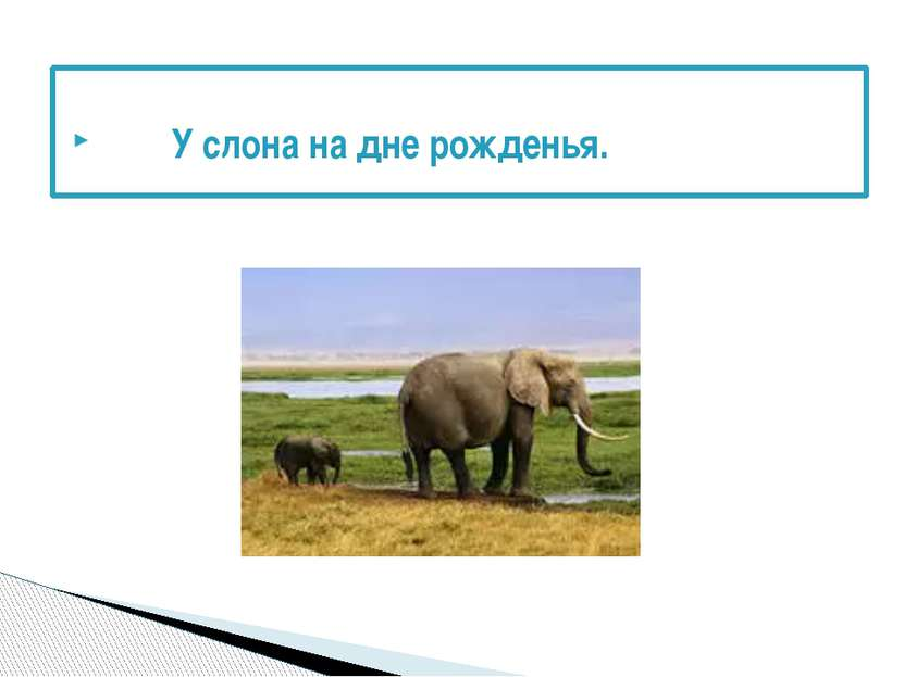 У слона на дне рожденья.