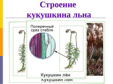 Строение кукушкина льна