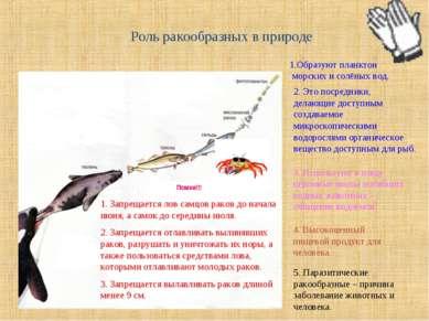 Роль ракообразных в природе 1.Образуют планктон морских и солёных вод. 2. Это...