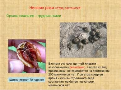 Низшие раки Отряд листоногие Щитни имеют 70 пар ног Биологи считают щитней жи...
