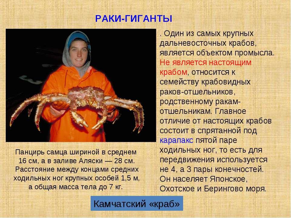 Камчатский «краб» . Один из самых крупных дальневосточных крабов, является об...