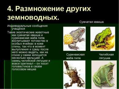4. Размножение других земноводных. Индивидуальные сообщения учащихся Такие эк...