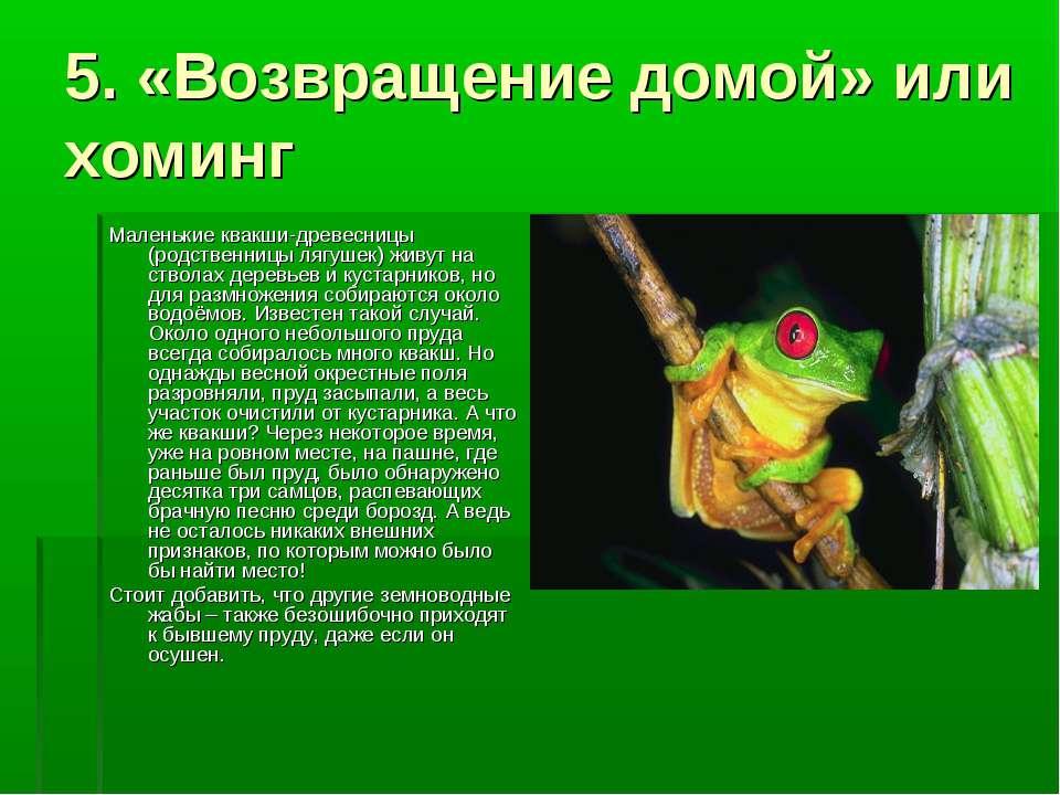 5. «Возвращение домой» или хоминг Маленькие квакши-древесницы (родственницы л...
