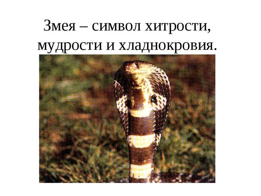 Змея – символ хитрости, мудрости и хладнокровия.