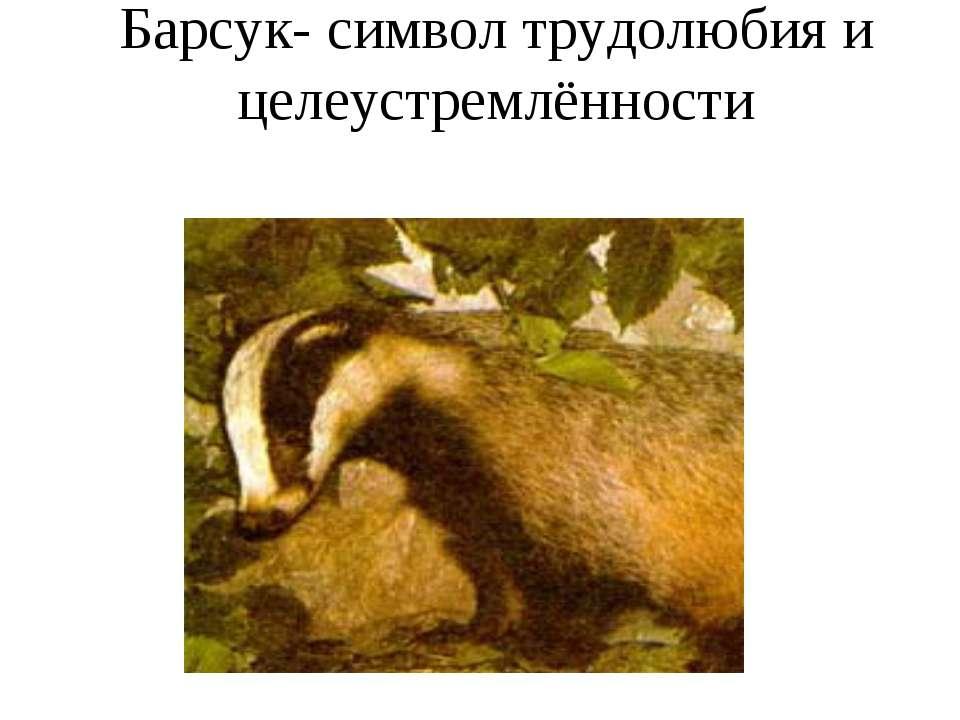 Барсук- символ трудолюбия и целеустремлённости