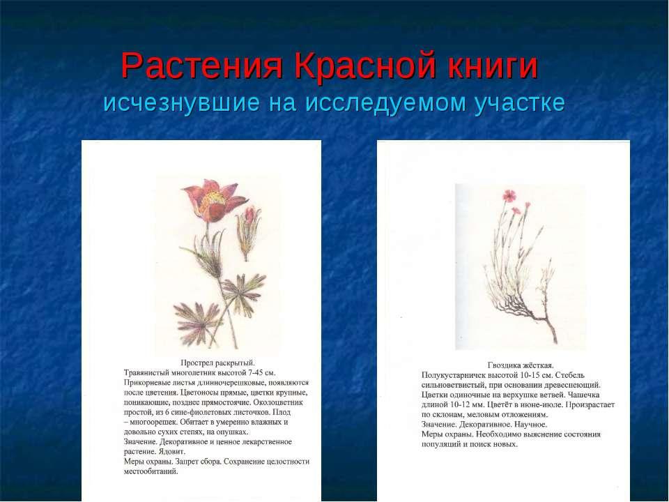 Растения Красной книги исчезнувшие на исследуемом участке