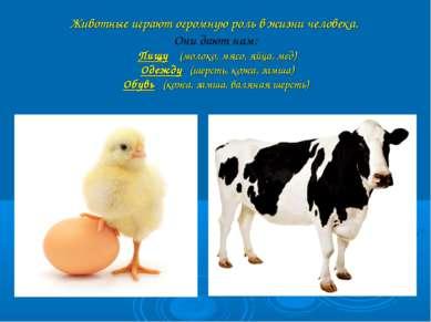 Животные играют огромную роль в жизни человека. Они дают нам: Пищу (молоко, м...