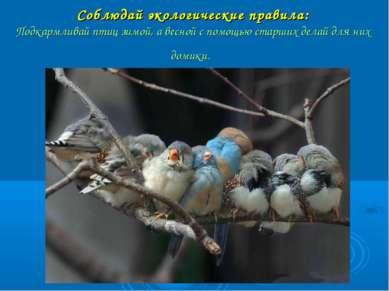 Соблюдай экологические правила: Подкармливай птиц зимой, а весной с помощью с...