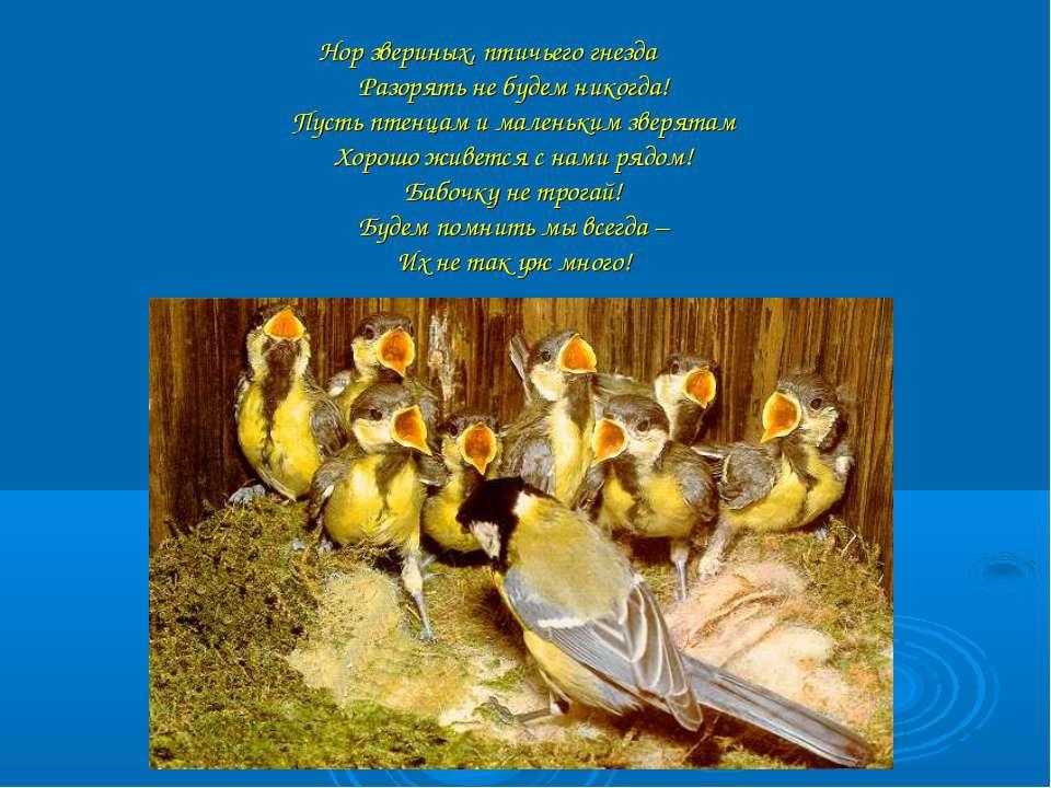 Нор звериных, птичьего гнезда Разорять не будем никогда! Пусть птенцам и мале...
