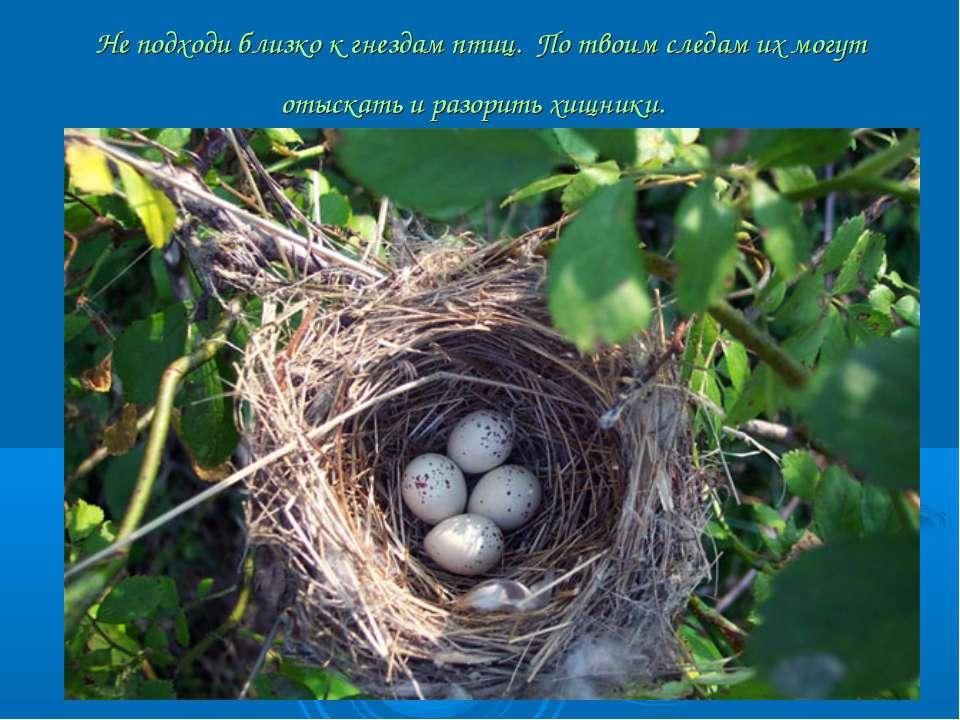 Не подходи близко к гнездам птиц. По твоим следам их могут отыскать и разори...