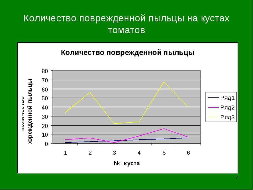 Количество поврежденной пыльцы на кустах томатов *