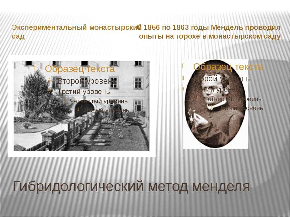 Гибридологический метод менделя Экспериментальный монастырский сад С 1856 по ...