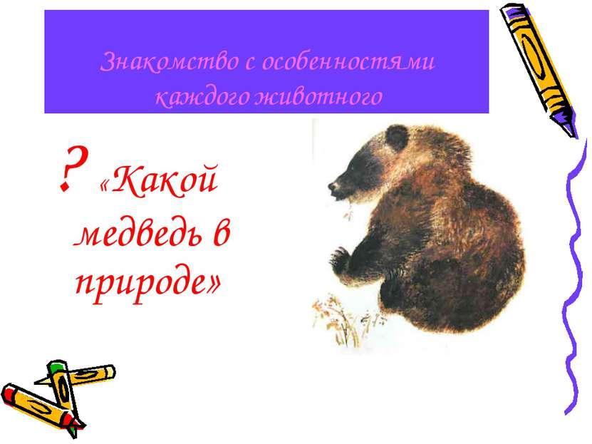Знакомство с особенностями каждого животного ? «Какой медведь в природе»