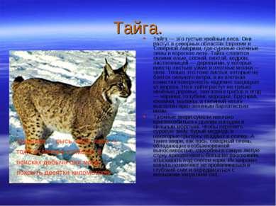 Тайга. Тайга — это густые хвойные леса. Они растут в северных областях Еврази...