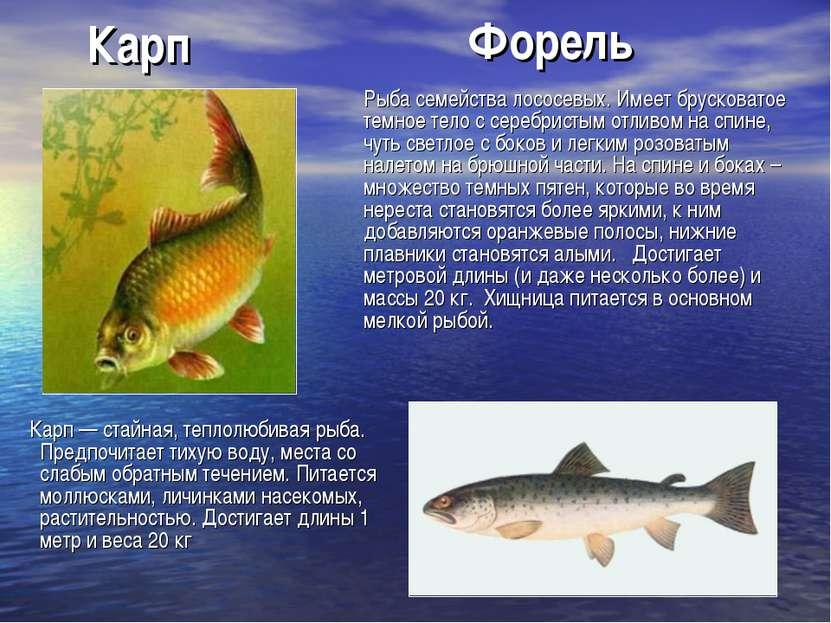 Карп Карп — стайная, теплолюбивая рыба. Предпочитает тихую воду, места со сла...