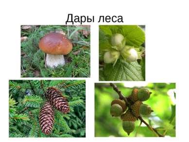 Дары леса